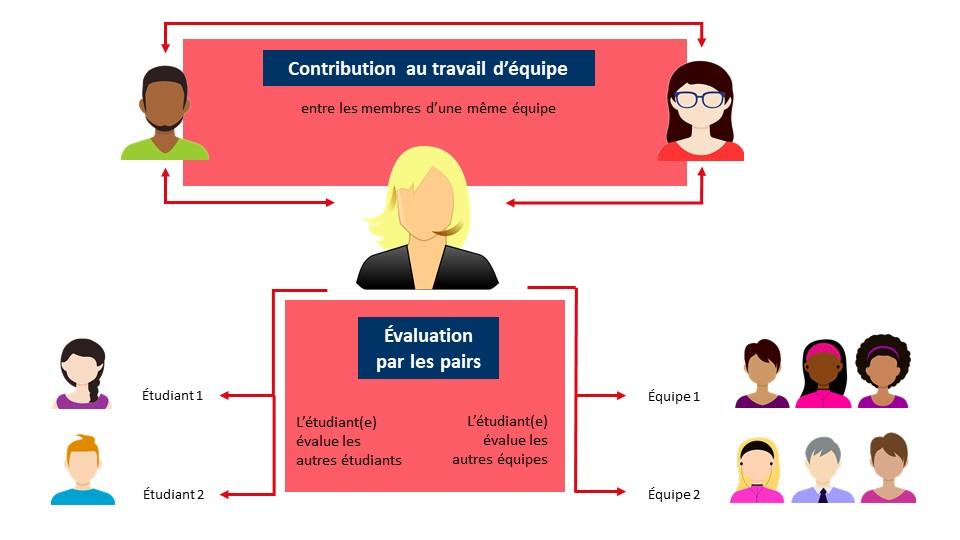 Schéma illustrant la contribution au travail d'équipe en tre les membres de l'équipe puis l'évaluation par les pairs